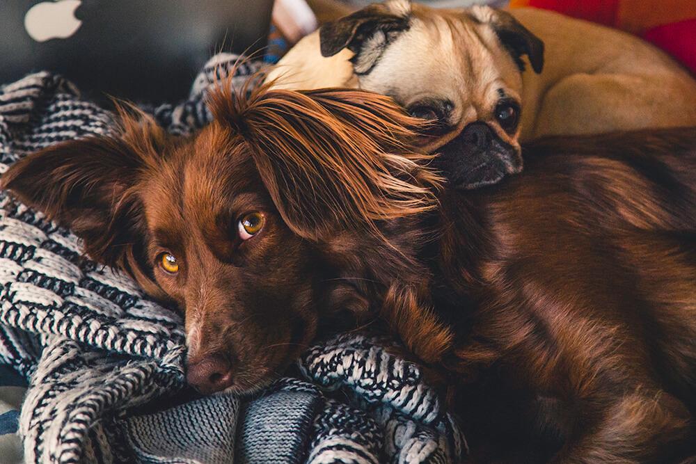 Proper pet care: The Basic Necessities